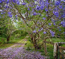 Jacaranda Lane by Renee Hubbard Fine Art Photography