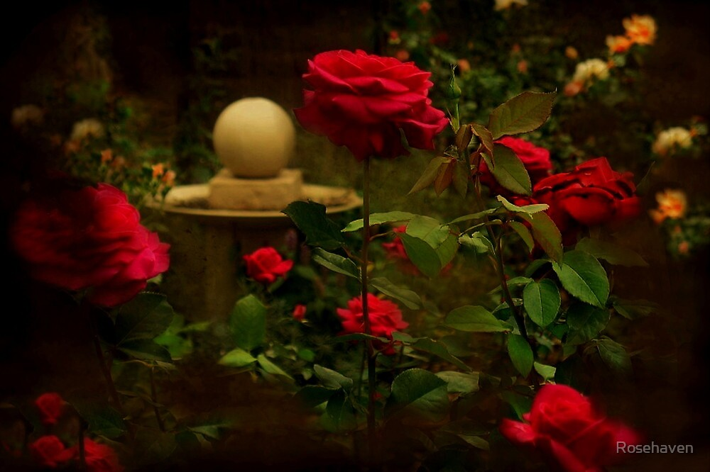 """""""Through the Roses ..."""" by Rosehaven"""