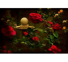 """Through the Roses ..."" Photographic Print"