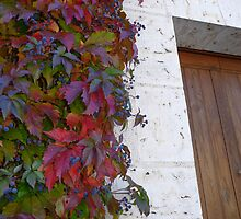 Autumn Glory by Carol Walker