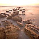 Into the Light - Marineland Beach, FL by Lori Botelho