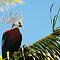 Birds In The Spotlight - Stylish!