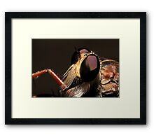 In the eyes of a robber Framed Print