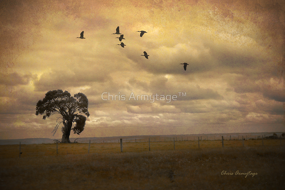 Shadows from the sky by Chris Armytage™