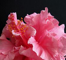Frilly Pink Lady by Gloria Abbey
