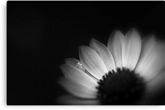 Anemone by Annie Lemay  Photography