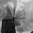 Windmill, Saltine di Trapani, Sicily by Andrew Jones