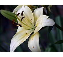 Just because she loves lilies  Photographic Print
