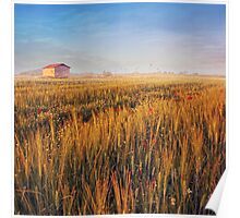 sunrise over misty wheat field Poster