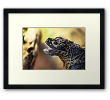 Reptile. Melbourne Zoo Framed Print