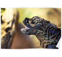Reptile. Melbourne Zoo Poster