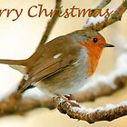 Robin on a snow covered branch, Christmas card by Andrew Jones