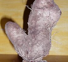 Hairy YAM. by D. D.AMO