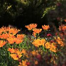 Treasure Flower by Robert Jenner