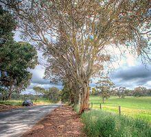 Gum Tree Dreaming - Blakiston Road, Blakiston, Adelaide Hills by Mark Richards