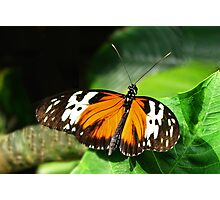 Butterfly Picture Photographic Print