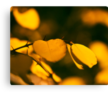 Mediterranean Autumn Canvas Print