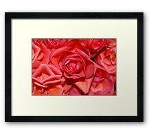 red roses. Framed Print