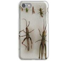Orthoptera iPhone Case/Skin
