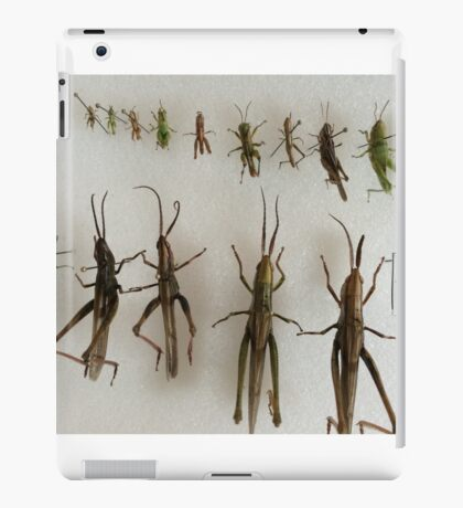 Orthoptera iPad Case/Skin