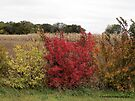 The Colors of Autumn by Barberelli