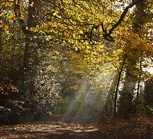 Autumn Sun Rays by TheFotoGraffer