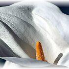 Calla Lily by Loree McComb