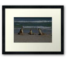 Australian Sea-lions Framed Print