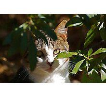 Pretty Cat Photographic Print
