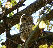Who, Who are You? The Owl said. N.W. Arkansas by David  Hughes