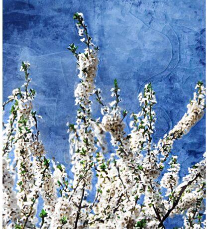 Cherry Blossoms on Blue Sticker