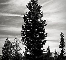 lonely tree by julianl