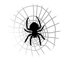 Spider and Web Photographic Print