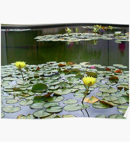 Aquatic flowers Poster