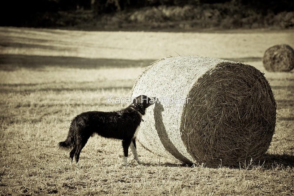 Sniffing the Haystack by Karen Havenaar