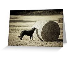 Sniffing the Haystack Greeting Card