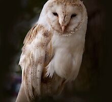 Female Barn Owl by outwest photography.co.uk