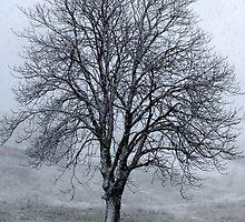 Snow Queen-Monterosi, Italy by Deborah Downes