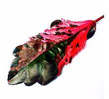 The Coolest Leaf in the World Photographic Print