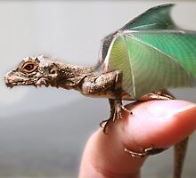 Baby hatchling dragon by Bill Brouard