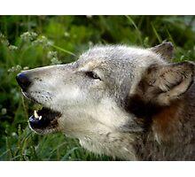 Keepin' Them Coyotes Away Photographic Print