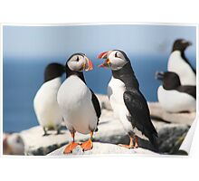 Puffin Chat Poster