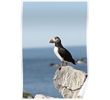 Lone Puffin Poster