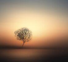 solitude by rsofyan