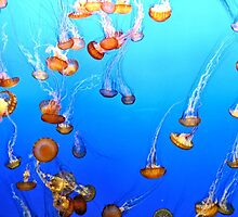 Lots of Jellies by Tracy Engle