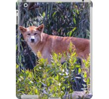 Dingo; Australian Wild Dog iPad Case/Skin