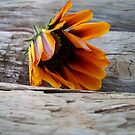 Fallen Flower by Chanzz
