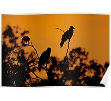 Sunset Kites  Poster
