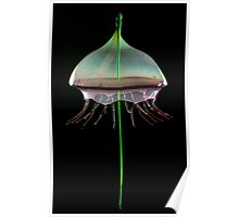 Water Jellyfish Poster