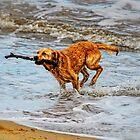 Wet Dog by Simon Duckworth